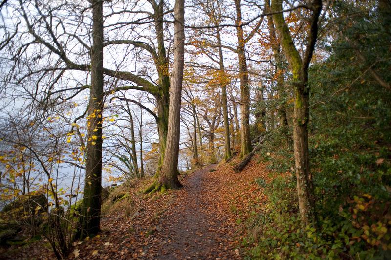 5161   Path Through Autumn Forest