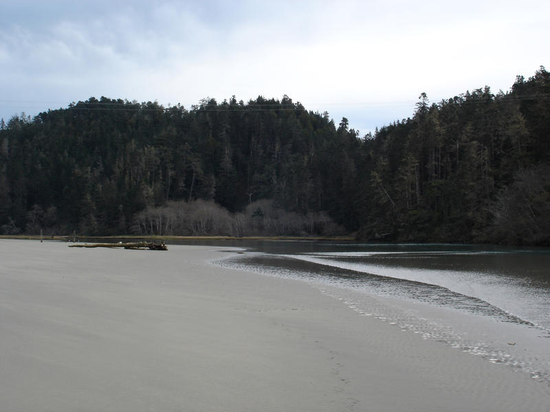 a shallow sandy coastal lagoon surrounded by trees