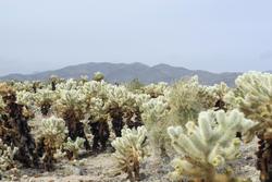 5639   Cactus Garden landscape