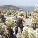 5640   Cactus Garden Details