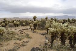 5641   Cactus footpath