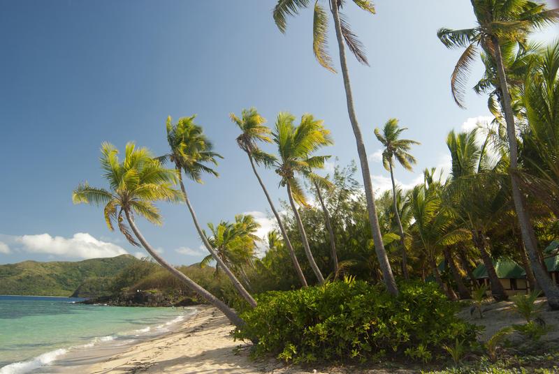 6320   Coconut palms on the seashore