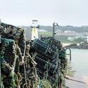 7287   Lobster pots in St Ives harbour