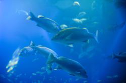 7397   Fish swimming through cyan tinted water