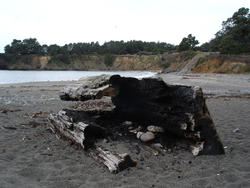 5794   burnt log