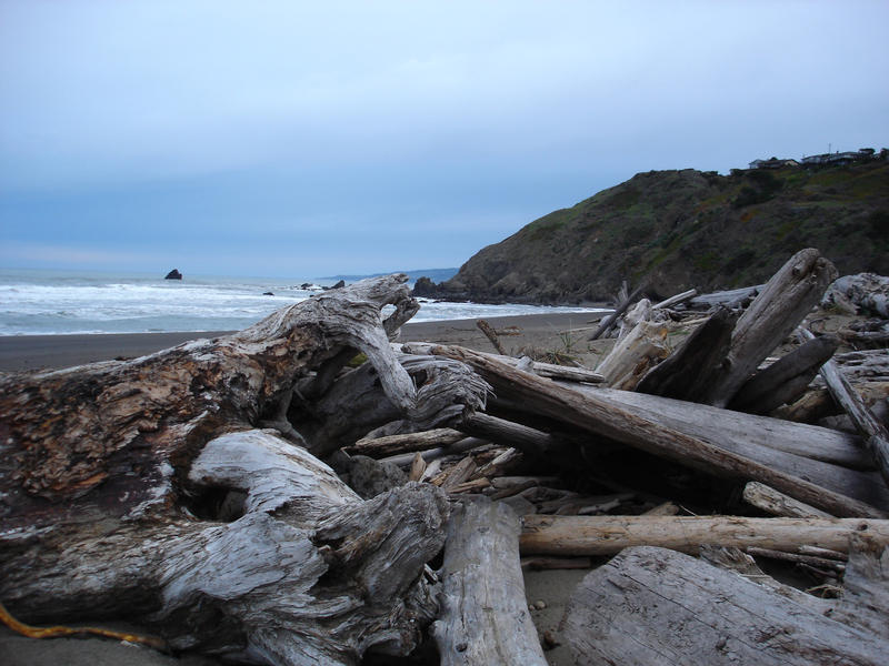 overcast day at a beach covered in driftwood logs