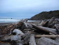 5795   driftwood beach