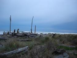 5805   driftwood scuplture