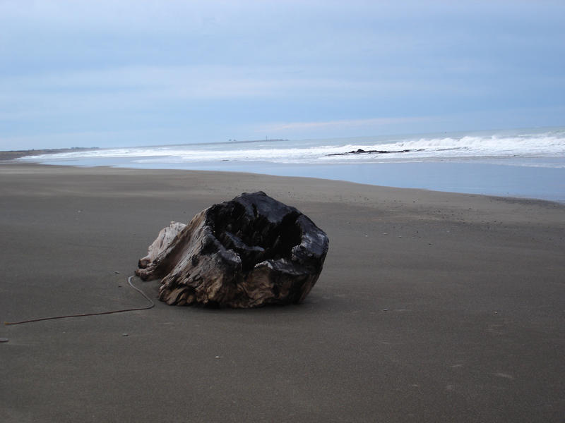 a large wooden tree stump washed up on a beach