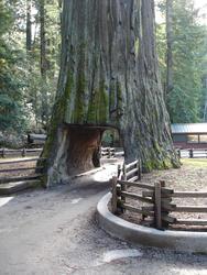 5769   drive through tree