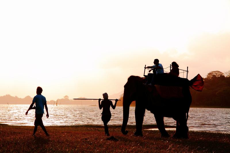 Visitors are enjoying ride on an elephant's back at Kandalama lake side, Sri Lanka