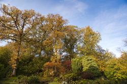 5167   Autumn Foliage In Woodland