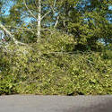 6764   Fallen tree on a road