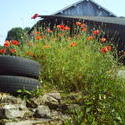 5141   france barn poppies