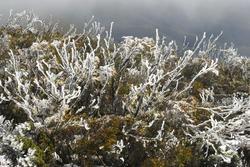 5816   frost winter plants