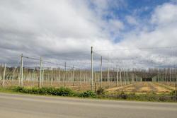5880   fruit vines