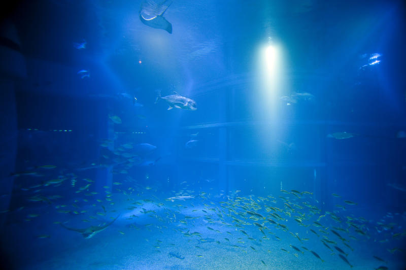 Large aquarium tank illuminated by a beam of light with blue water and shoals of fish, part of a commercial tourist attraction