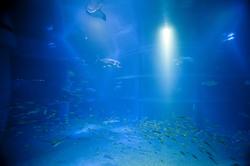 7433   Large aquarium tank with blue water