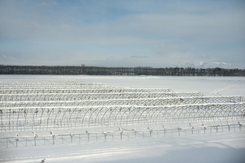 hokkaido farmland in the winter covered with snow