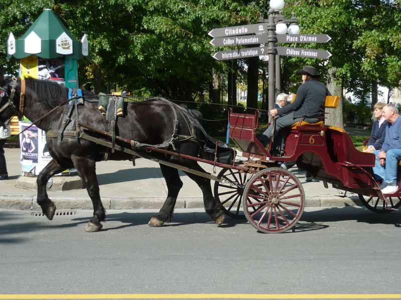 Draft horse pulling a trap taking tourists on a sightseeing trip around the city