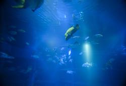 7399   aquarium wrasse