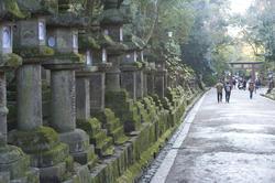 6067   Kasuga Taisha Temples