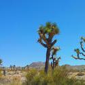 6165   joshua desert