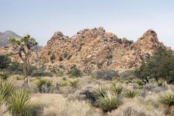 5655   desert landscape