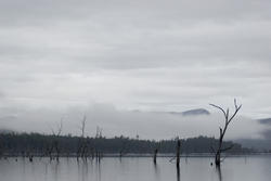 5851   lake rowallan trees