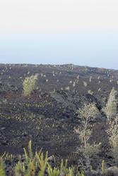 5526   Lava Field landscape
