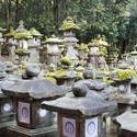 6082   Kasuga Taisha Lanterns