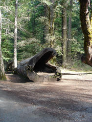 5767   hollow tree trunk