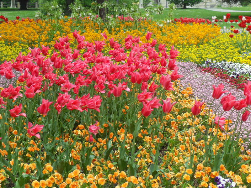 <p>Red tulips at Mainau Island Flower show in the Bodensee area of Germany</p>