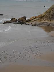 5763   seagulls