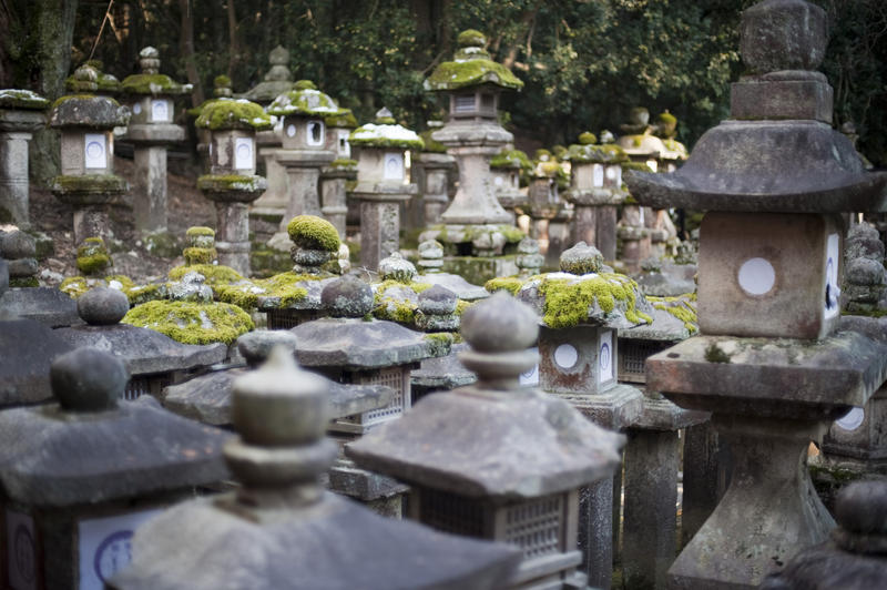 a forest of kasuga-doro stone lanterns near the Kasuga Taisha Shrine complex, Nara, Japan