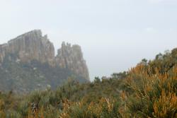 5907   cape pillar vegetation