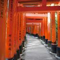 6138   Torii gate Tunnel