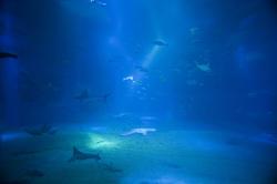 7436   Underwater marine ecosystem