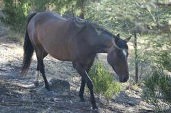 6390   Brown horse walking past