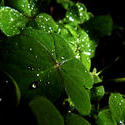 7629   Water droplets