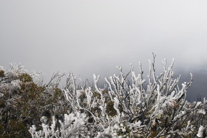 background of freezing fog with frost covered plants in the foreground