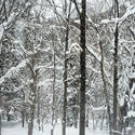 5971   winter forest snow