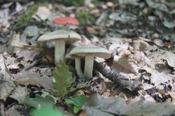 6417   woodland mushrooms