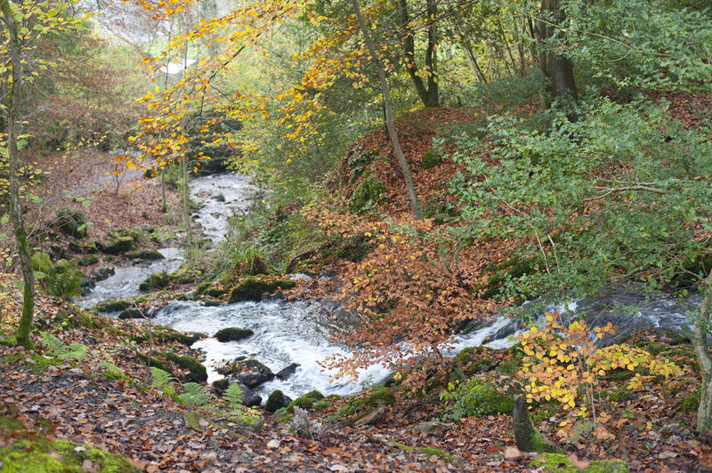 Fast flowing river winding through woodland with colourful autumn or fall foliage