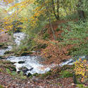 5175   River Flowing Through Autumn Woodland