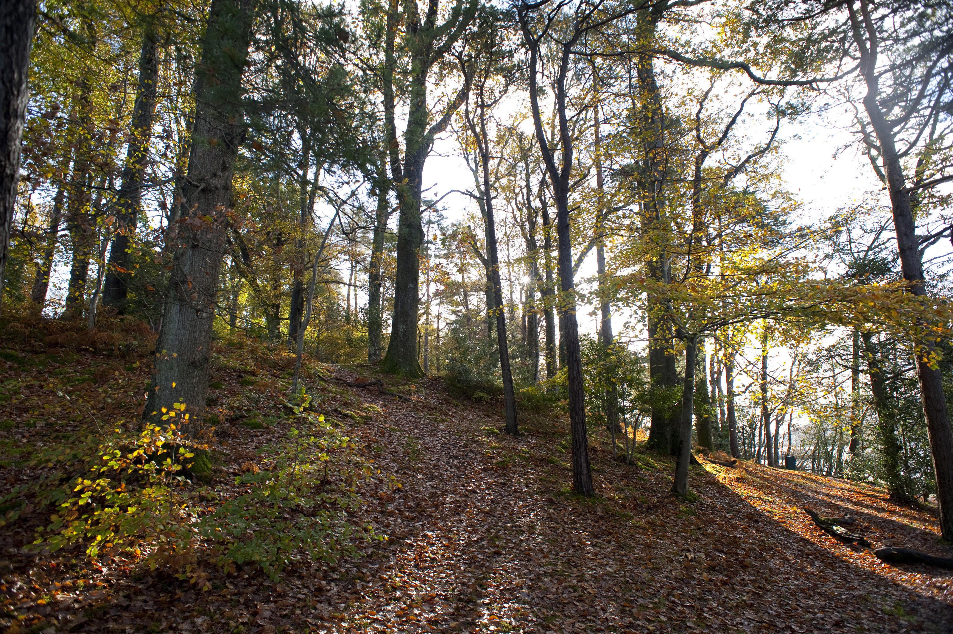 Free Stock Photo 5177 Autumn Woodland Scene Freeimageslive