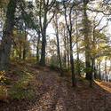 5177   Autumn Woodland Scene