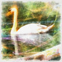 8992   abstract swan