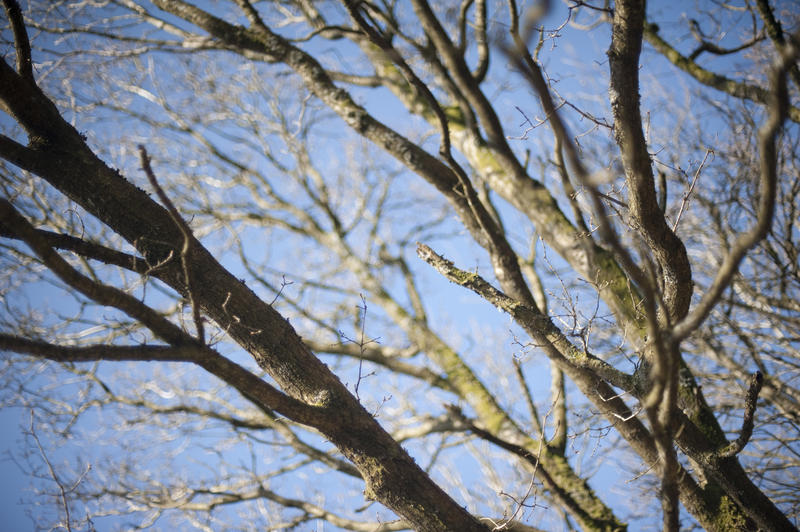 Intricate tracery of bare leafless tree branches against a sunny blue sky in winter, closeup view