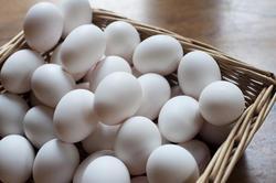 8477   Basket of white chicken eggs